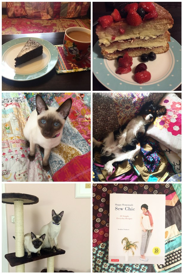 cake-and-pets